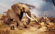 插图动物展览将于11月12日在西澳大学美术馆闭幕